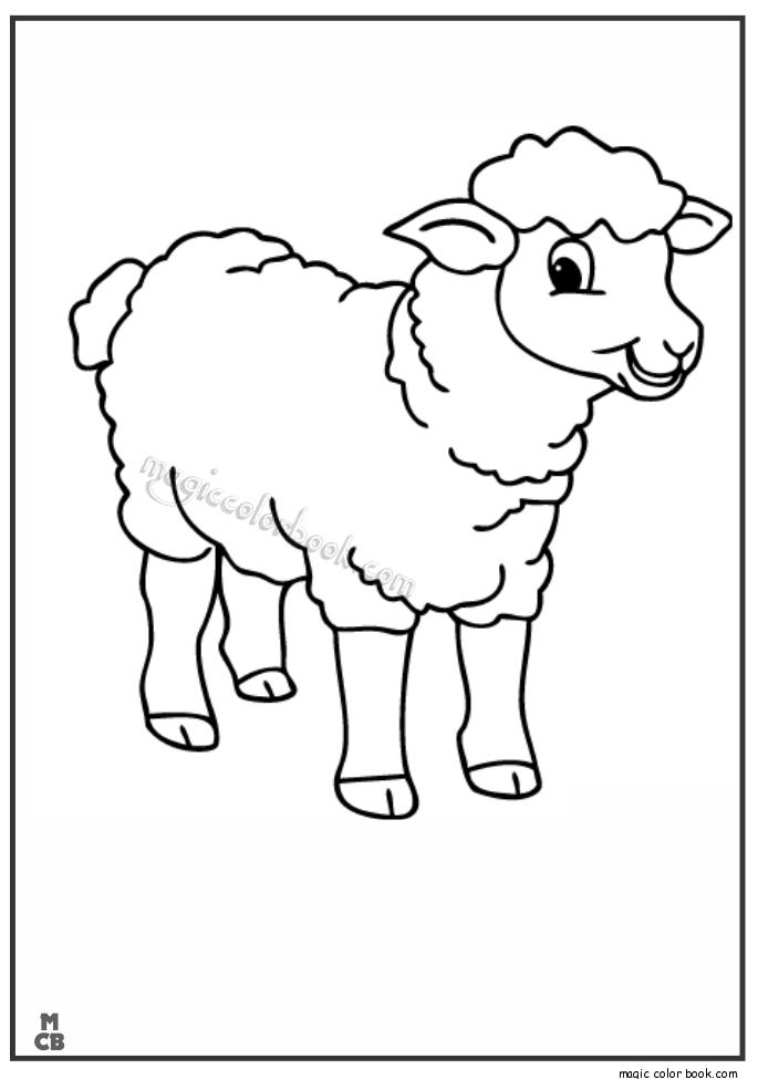 The Sheep Coloring Cartoon
