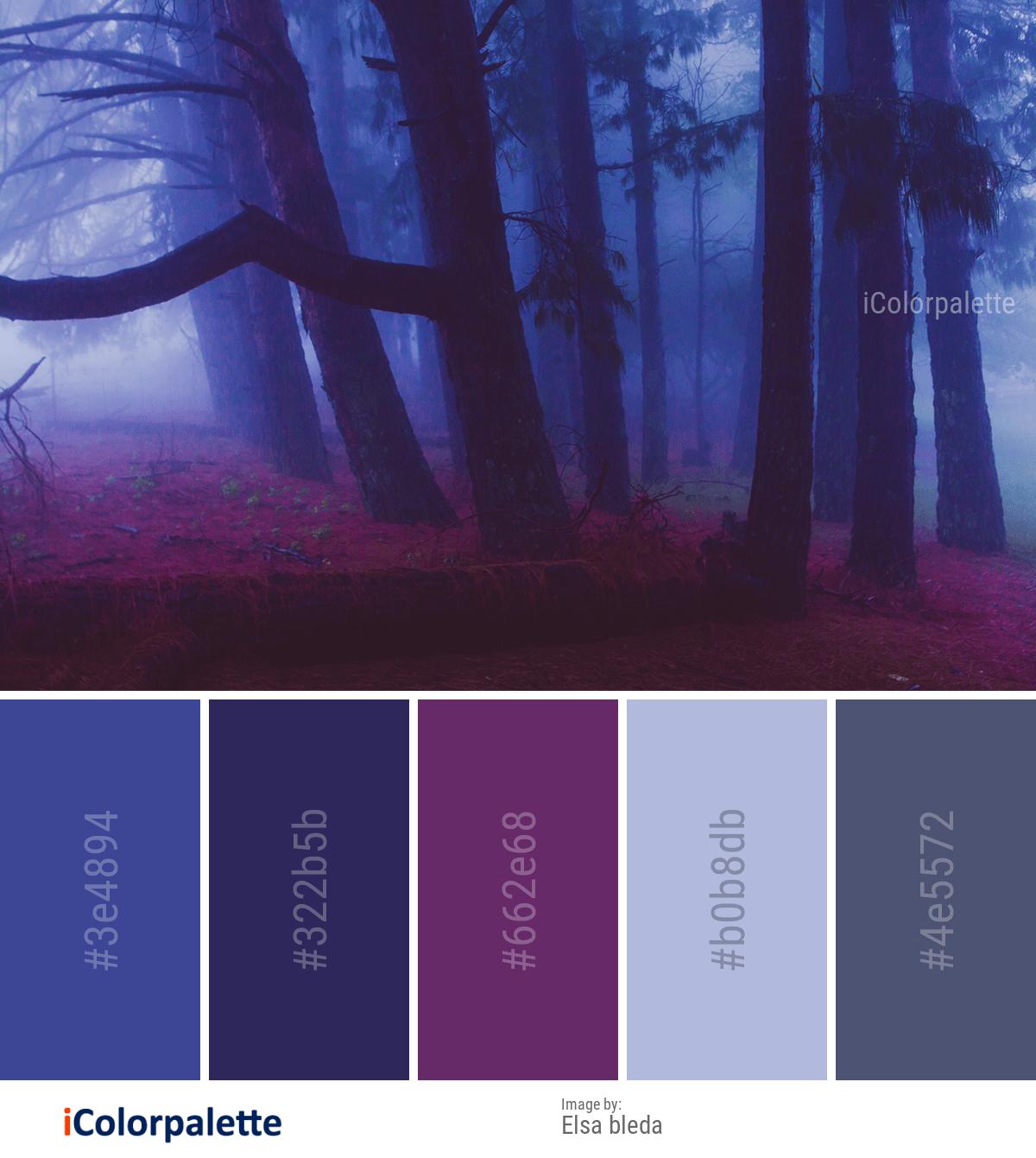 17 Color Palette inspirations from Elsa bleda images