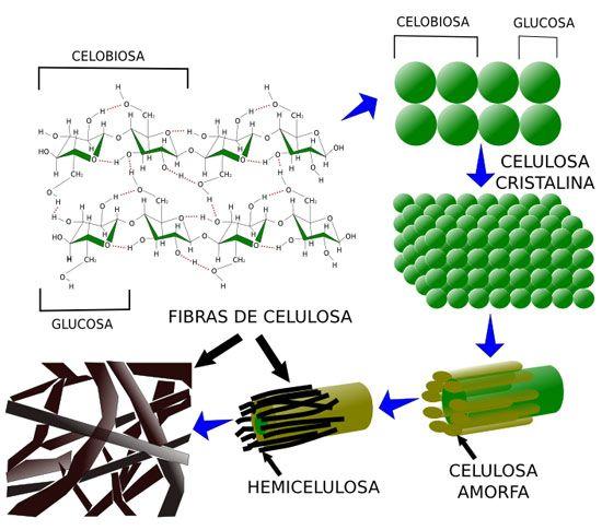 Estructura De La Celulosa Earthship