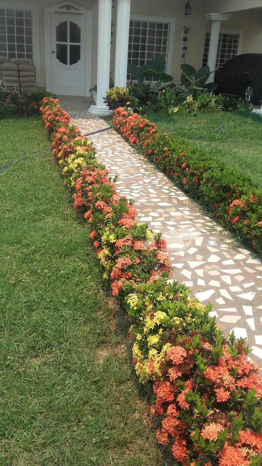 Ixora Red And Yellow In My Garden Tropical Garden