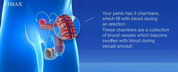 obat kuat pembesar penis alat sex pelangsing herbal vimax di