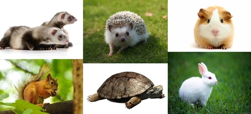 Top 10 Best Pets Easy Pets Pets