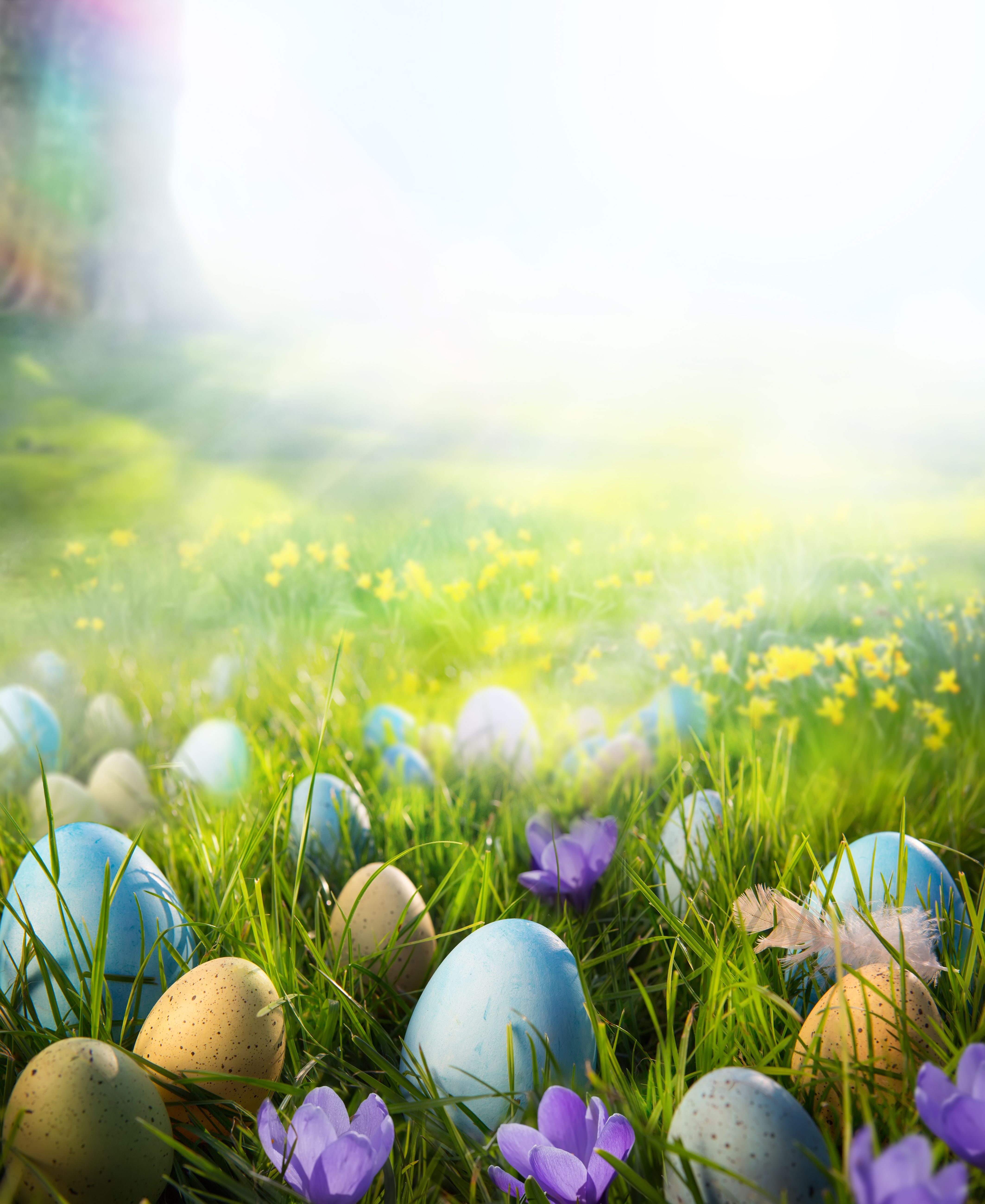 Printed Colorful Easter Eggs On The Grass In The Sunshine Backdrop For Photography Easter Backgrounds Easter Colors Coloring Easter Eggs