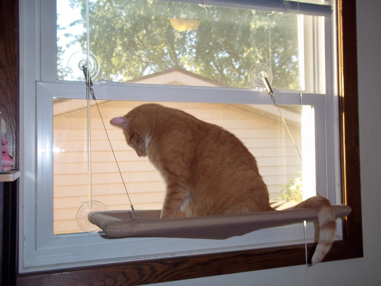 Cheapskate 4 Life June 2011 Cat Window Seat Hammock Pet