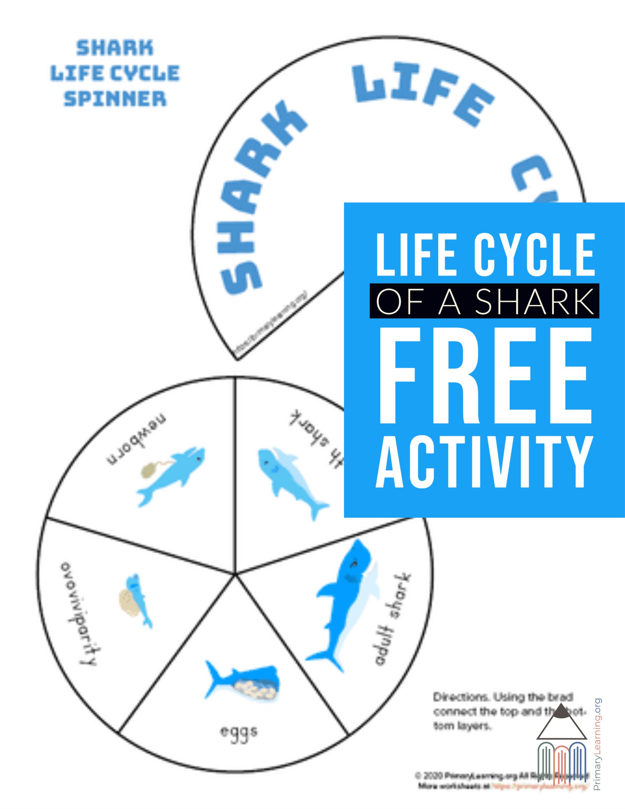 Shark Life Cycle Spinner