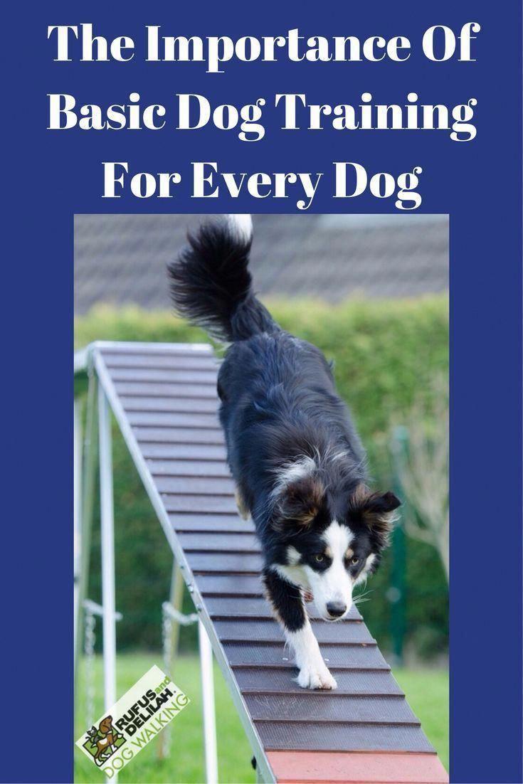 Brainy assumed responsibility command for dog training