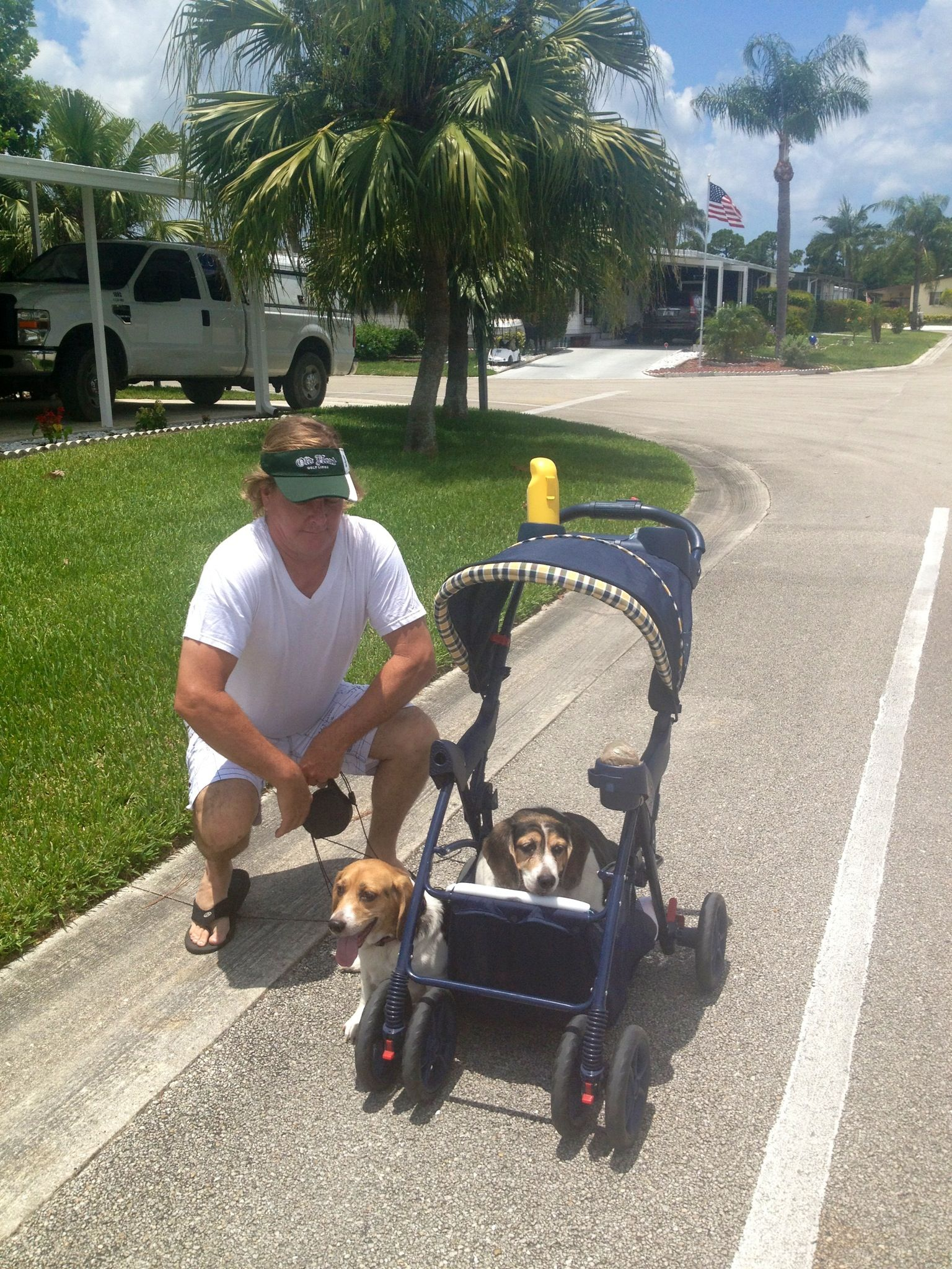 baby stroller converted to a dog stroller for a handicapped baby