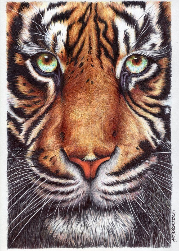 Tiger by ThessaGreenleaf on deviantART Tiger, Deviantart