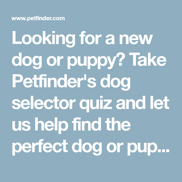 Looking For A New Dog Or Puppy Take Petfinder S Dog Selector Quiz
