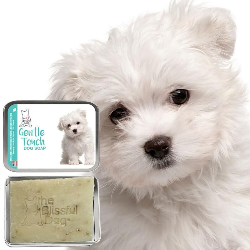 Maltese Gentle Touch Puppy Soap Maltese Dogs Maltese Puppies