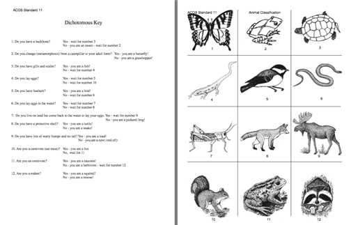 {Dichotomous Key Worksheet Animals – Dichotomous Key Worksheet