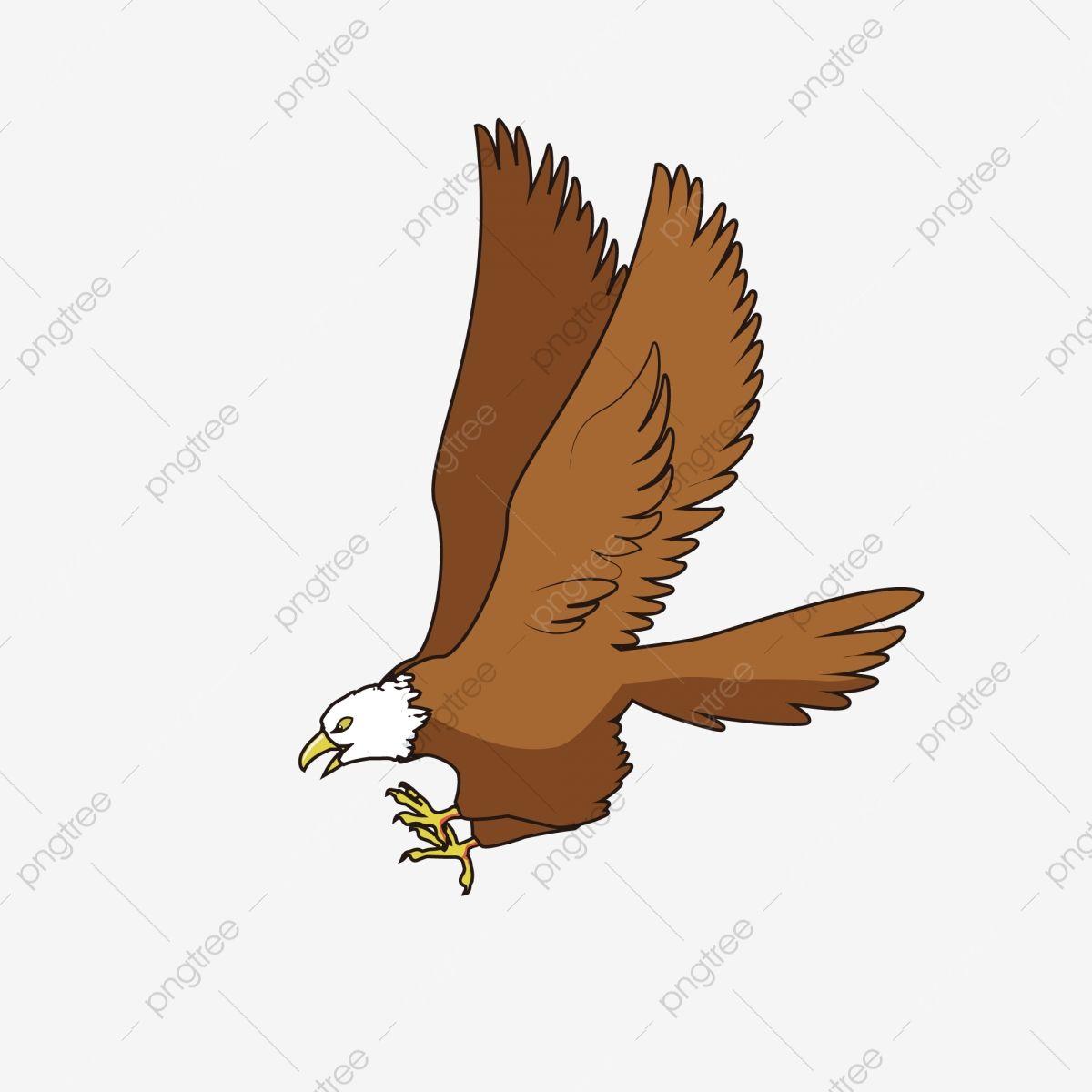 القطامي الصقور والنسور الصقور والطيور Goshawks العصفور الصقور والأسرة الصقر والحيوانات آكلة اللحوم شرسة الطيور الجارحة ناقلات صور ملونة منظمة العفو الدو Animals Eagle Rooster