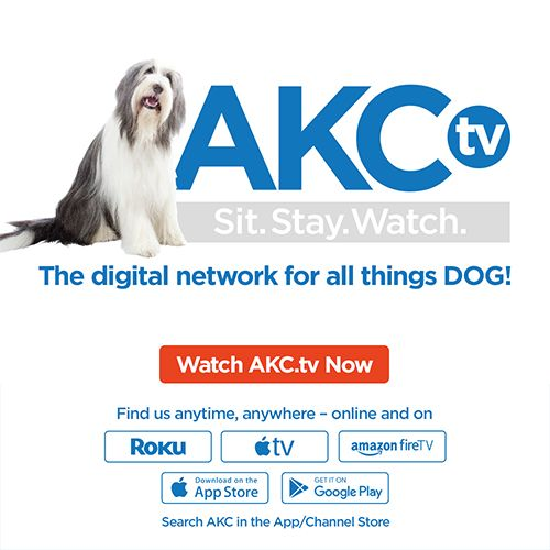 AKC's Guide to Responsible Dog Breeding Homemade dog