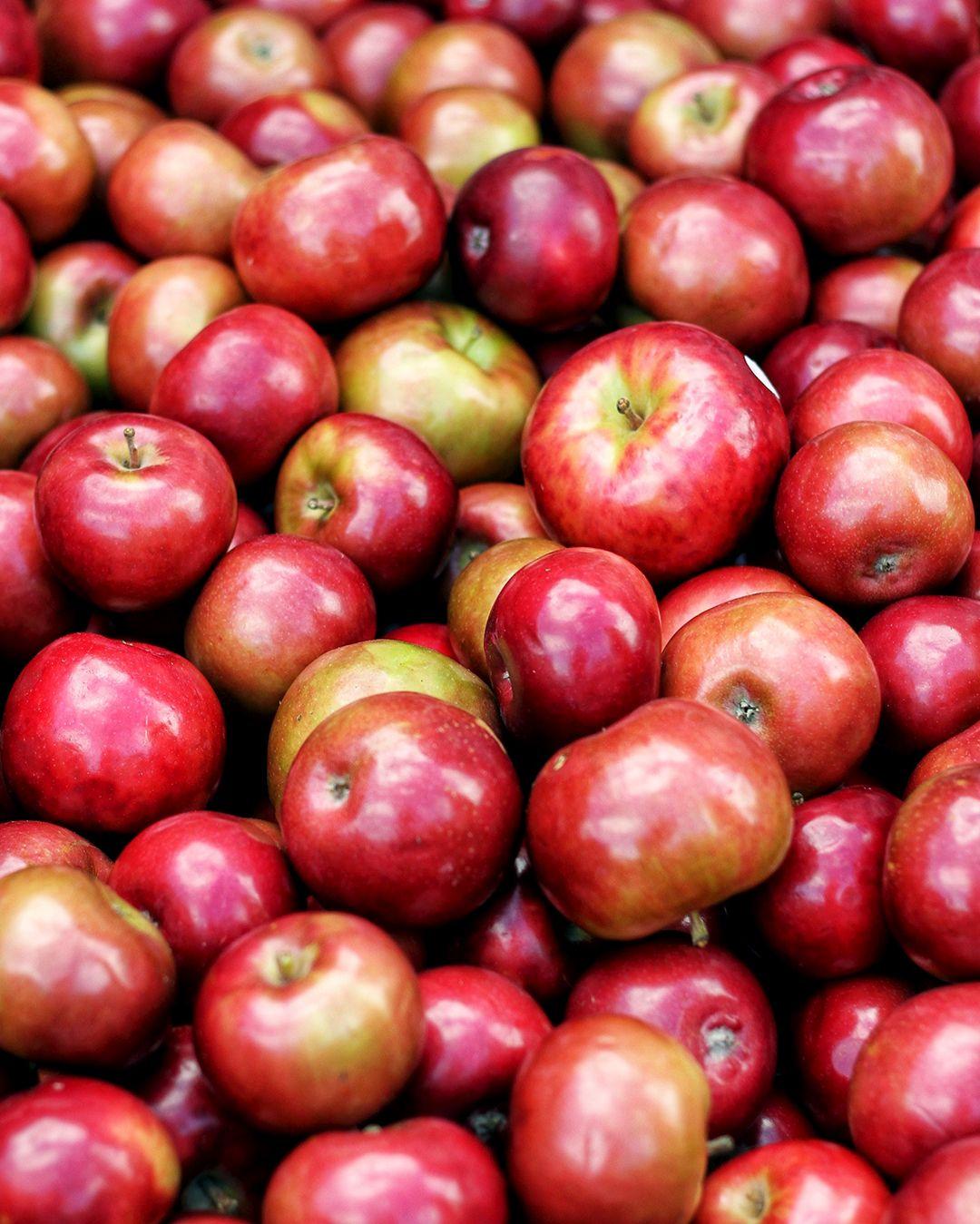 Wisata Kebun Apel
