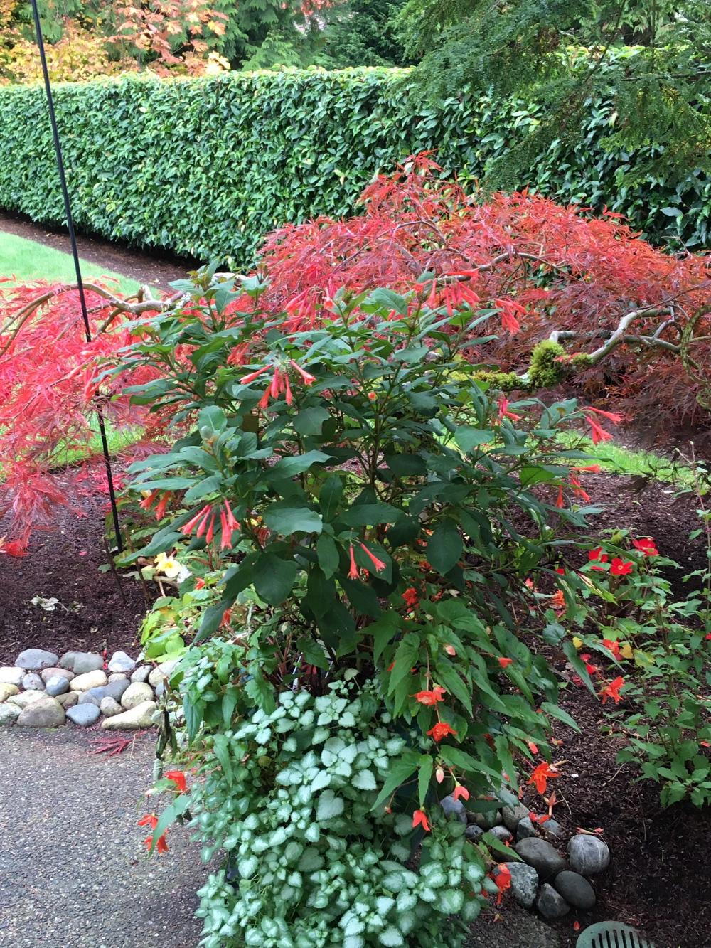e6779246c6ff0ee83ea499ef6b84c1c7 - Gardening With Oregon Native Plants West Of The Cascades