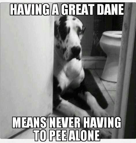 This Is So True Although My Pup Wants To Use That Opportunity To