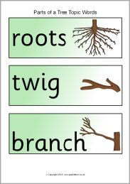 Parts Of A Tree Topic Word Cards Free Downloadable Pdf Word