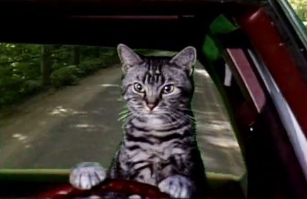 toonces the driving cat