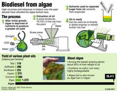 making fuel from algae the climates for human emergence  cleanedison annual essay contest 41 best renewable energy clean tech sustainability images on
