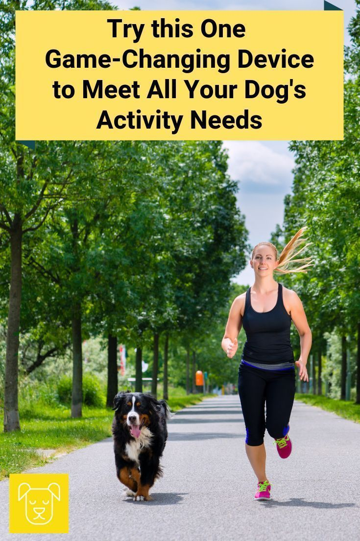 If you're serious about your dog's activity needs than don