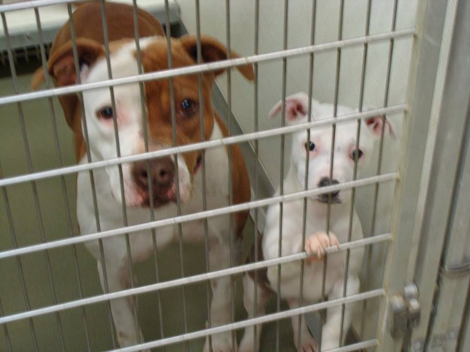 17+ Maury county animal shelter ideas in 2021