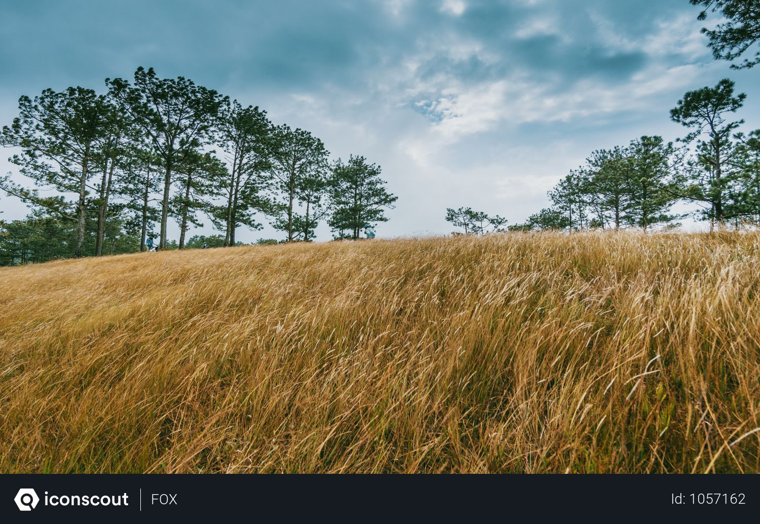 Free Wide Brown Grass Field Surrounded By Trees Photo Download In Png Jpg Format Landscape Grass Field Photography Guide