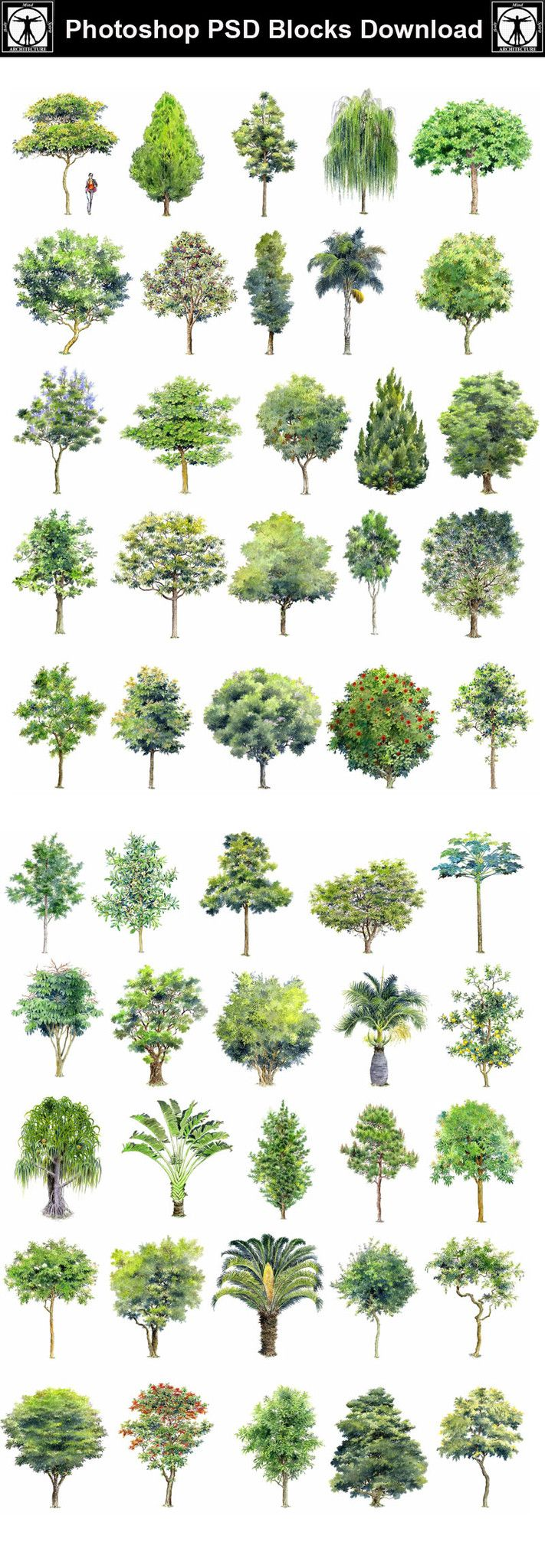 Hand painted psd tree blocks 2 cad design free cad for Autocad landscape architecture