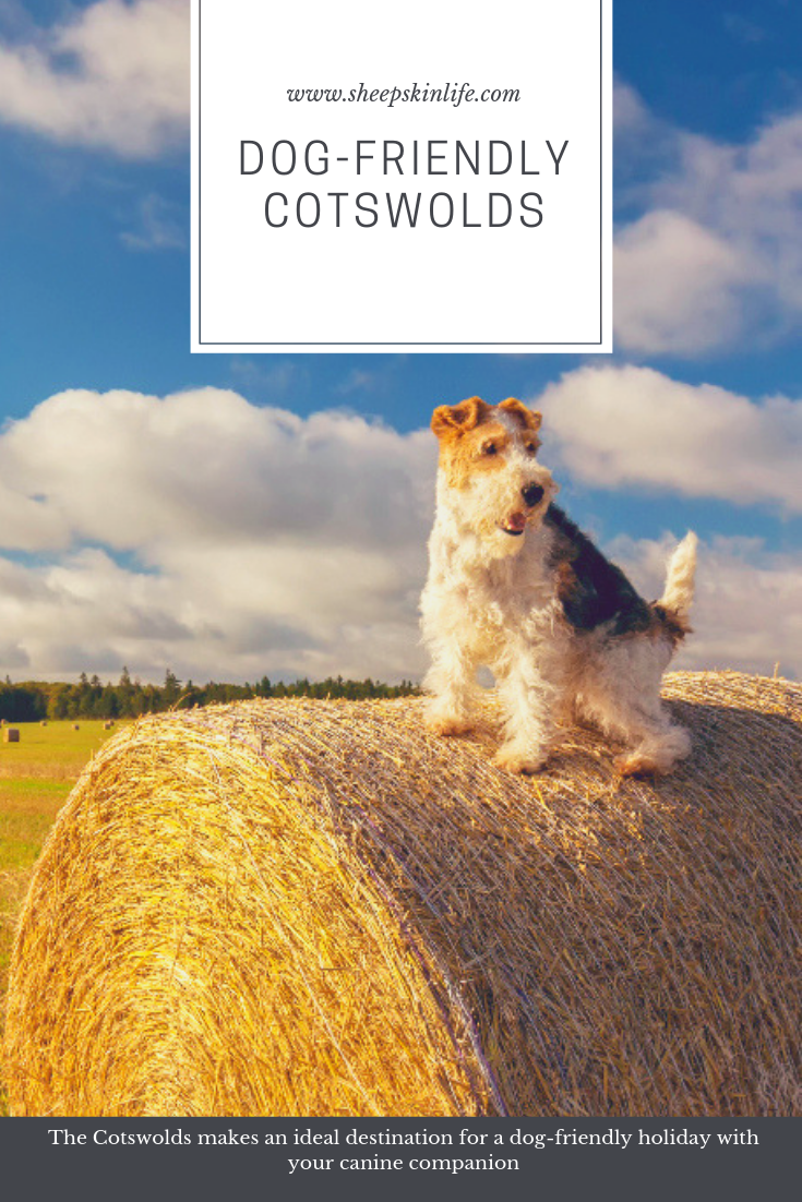 The Cotswolds Makes An Ideal Destination For A Dog Friendly Holiday With Your Canine Companion Dog Friends