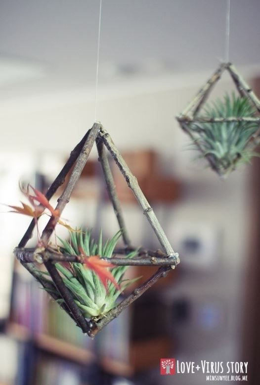 HomelySmart  10 DIY Air Plant Holders For Your Home  HomelySmart