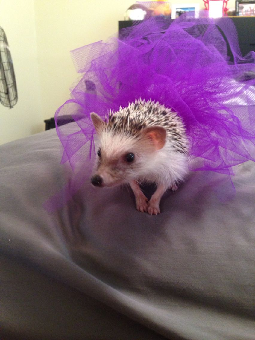 Hedgehog tutu made out of tulle and elastic. So cute! Perfect for Halloween!