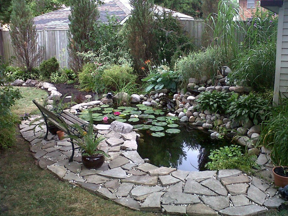 This is my backyard little Oasis. It is about 4 years old ...