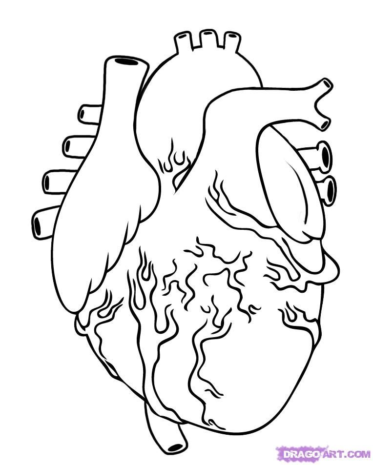 how to draw a human heart step 5 | I\'m not bad, I\'m just drawn that ...