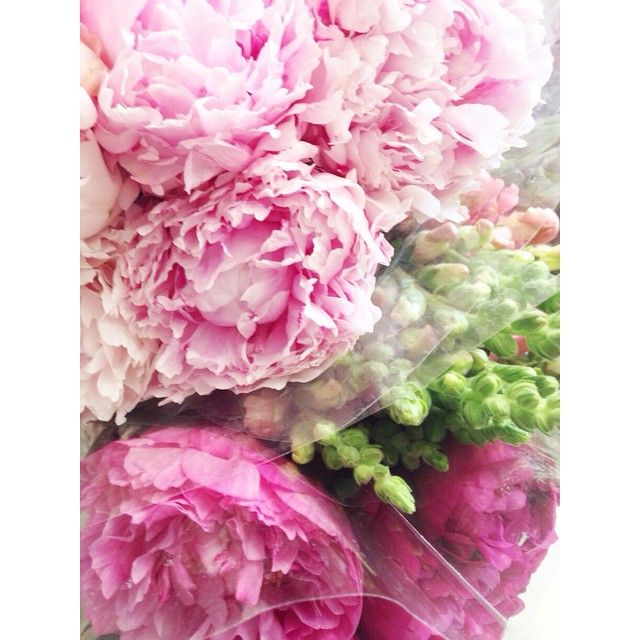 I just may have gone a little nuts at the market today, but I swear they were on sale! #flowersofinstagram #flowers #blogger #projects #peonies #pinkpeonies #photography #shabbyfufu #nationalpinkday