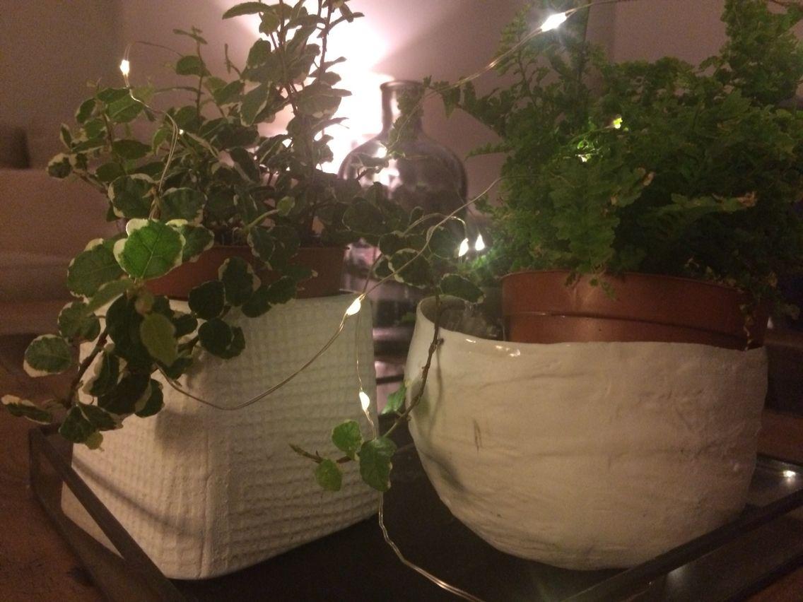 Plantas y luces