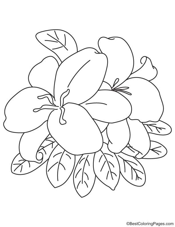 Easter Lily Coloring Page Easter Lily Coloring Pages Coloring Pages For Kids