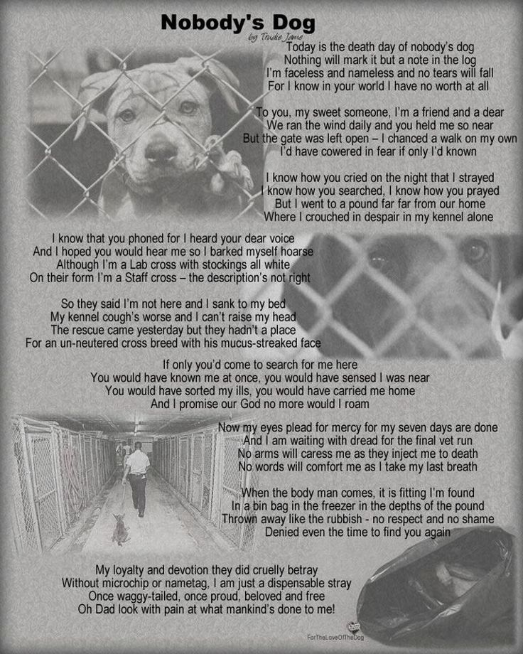 Nobody S Dog Best Friends Pets Animal Quotes Dog Death