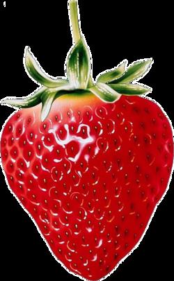 Coloriage Panier De Fraises.Tubes Fruits Illustrations Fruits En 2019 Dessin Fruits
