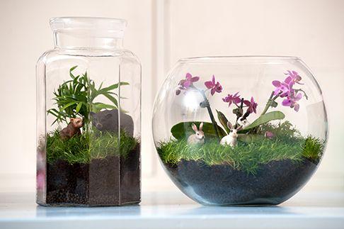 Karins konstgrepp: Växtterrarium