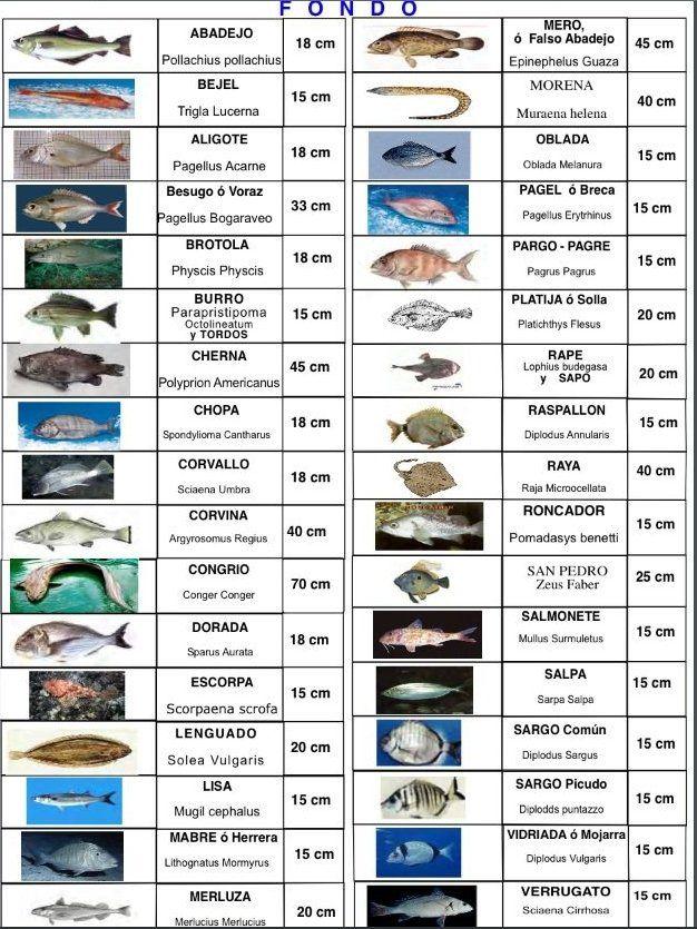 Todo sobre la Licencia de pesca, trámites, renovación, documentación ...