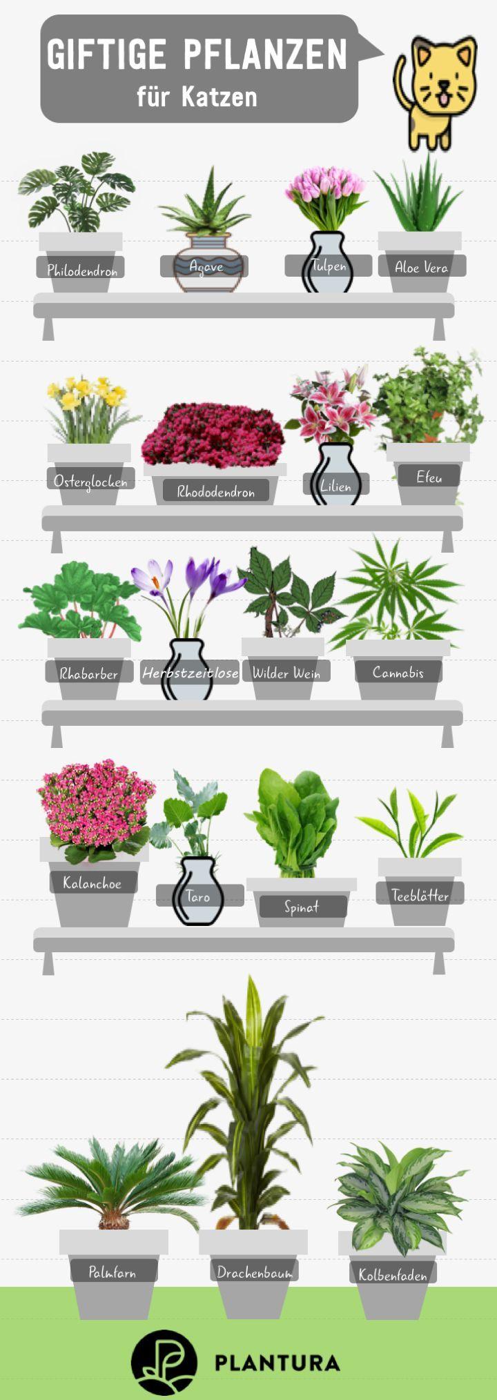 10 Giftige Zimmerpflanzen Fur Haustiere Plantura Garten Ideen Tipps Gemuse Obst Krauter Giftige Pflanzen Zimmerpflanzen Giftpflanzen