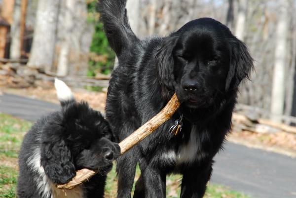 Stick Together Forever Bigdogs Premium Dog Food Dogs