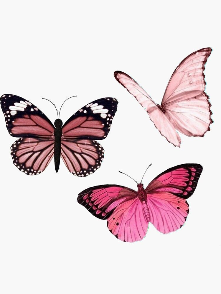 Pegatina Pegatinas De Mariposa Rosa Estetica De Emmagsheehan Butterfly Art Print Butterfly Wallpaper Iphone Butterfly Drawing
