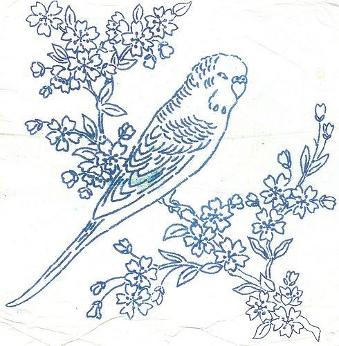 Embroidery Pattern Budgie Flickr Photo Sharing Outlines