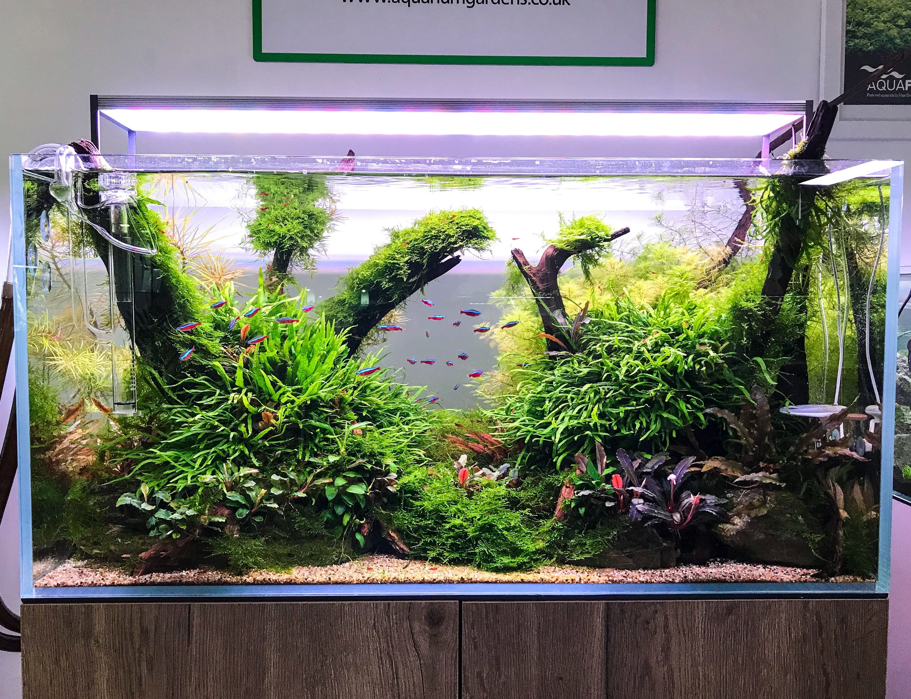 Aquascape In Store Gallery All Products Available To Buy From Our Website Aquariumgardens Co Uk Aquariumfreshw Nature Aquarium Aquarium Landscape Aquascape