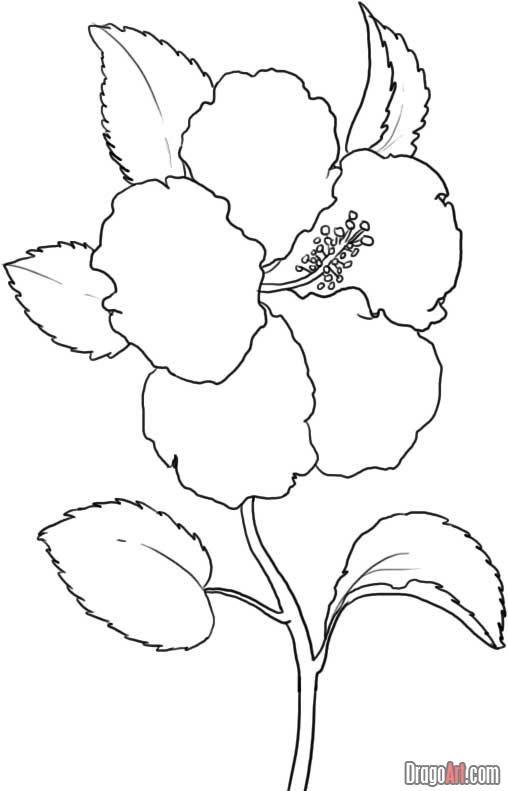 Hibiscus Flower Printable Flower Coloring Pages Flower Coloring Pages Flower Coloring Sheets