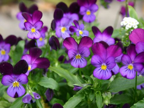 9 best flowers for garden design gardens plants and flowering plants 9 best flowers for garden design mightylinksfo Gallery