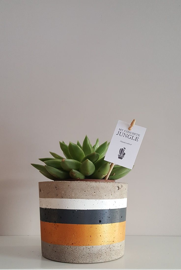 My Concrete Jungle Handcrafted Concrete Plant Pots Made In