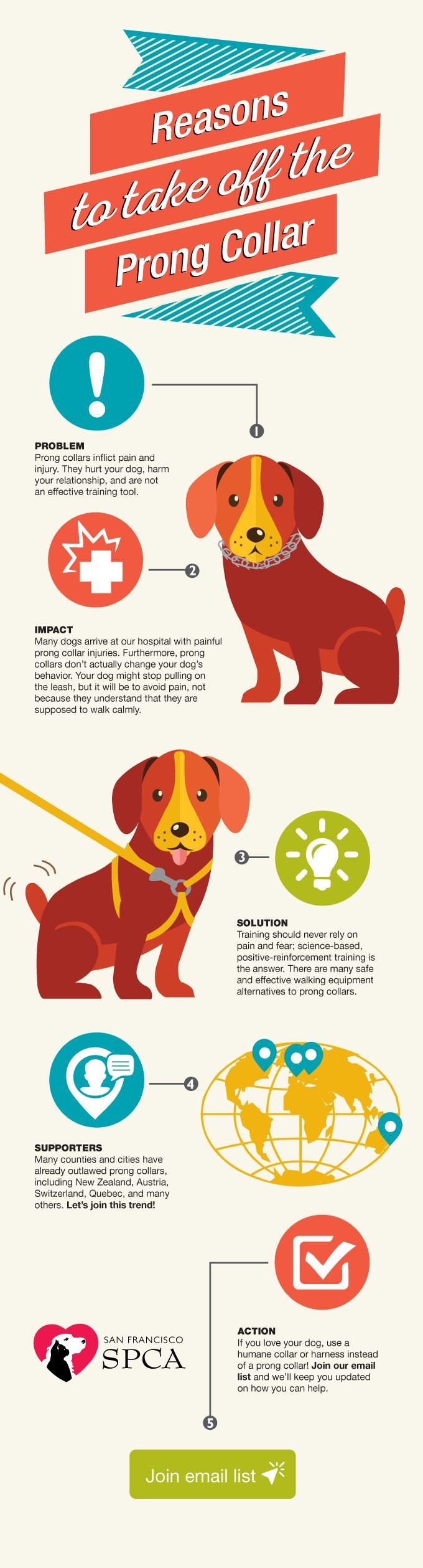 Sf Spca Prong Infographic Dog Training Prong Collar Dog