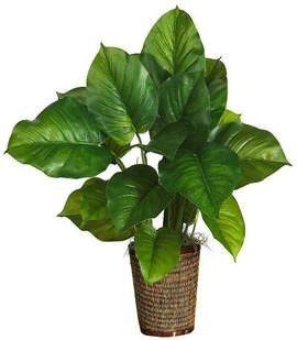 Autotrophic Nutrition Silk Plants Small Artificial Plants Artificial Plant Arrangements