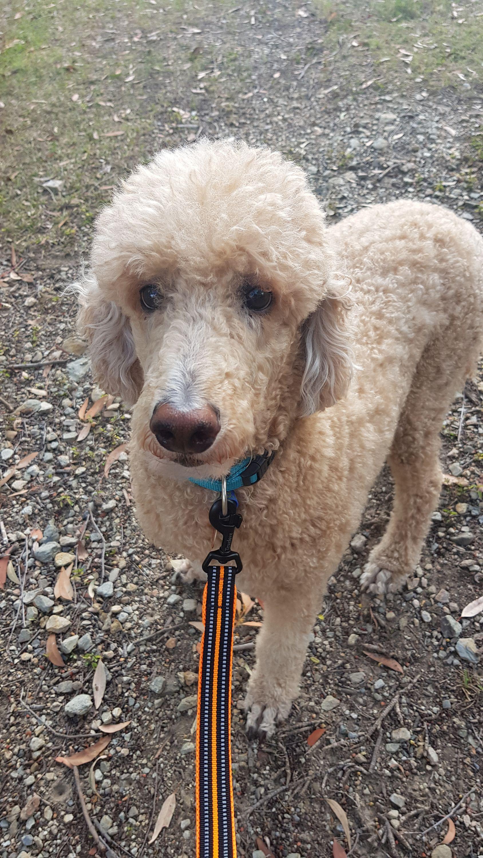 Pin By Precious Paws Dog Walking Pe On Pet Sitting Services In 2020 Pet Sitting Services Pet Sitters Pets